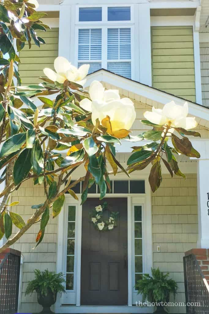 Easy Magnolia Wreath with Magnolia Tree