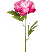 Dark Pink Peony Stem by Ashland®