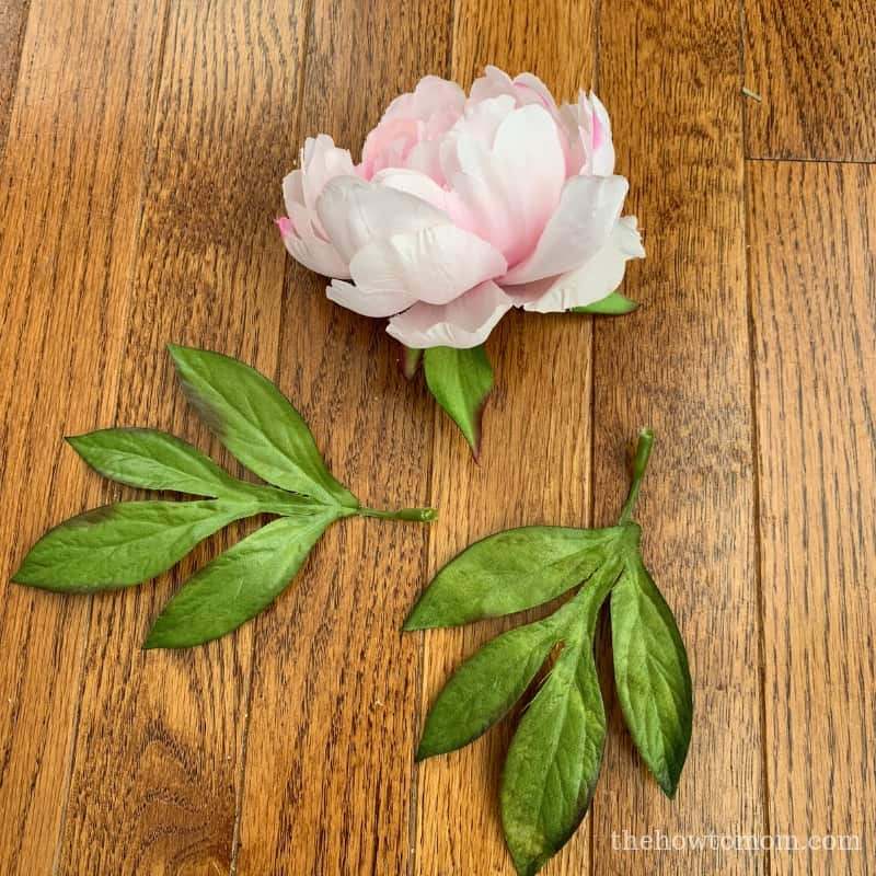 Pink Peony Bloom