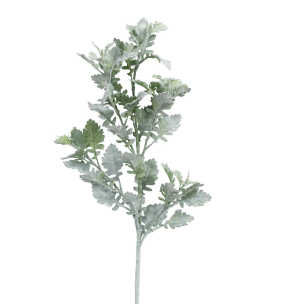 Frosted Dusty Miller Spray Stem by Ashland�