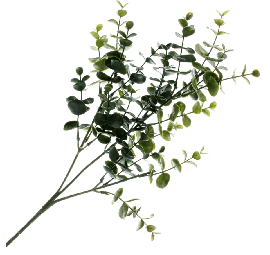Eucalyptus Stem by Ashland�